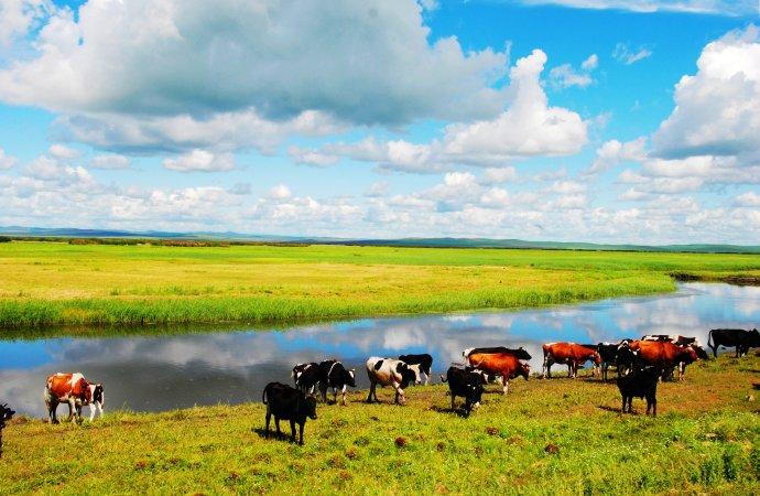 狼图腾的故乡 原生态草原内蒙古锡林郭勒草原、